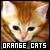 Orange Cats Fan