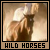 Wild Horses Fan